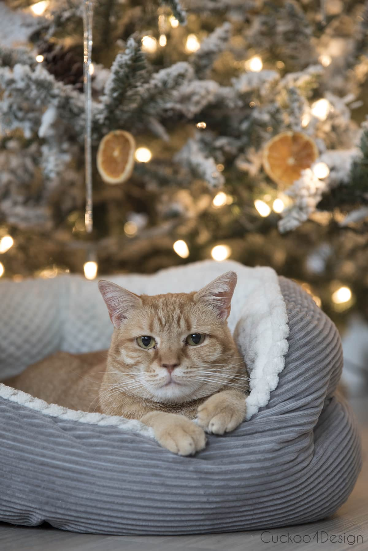 orange tabby female cat under German Christmas tree