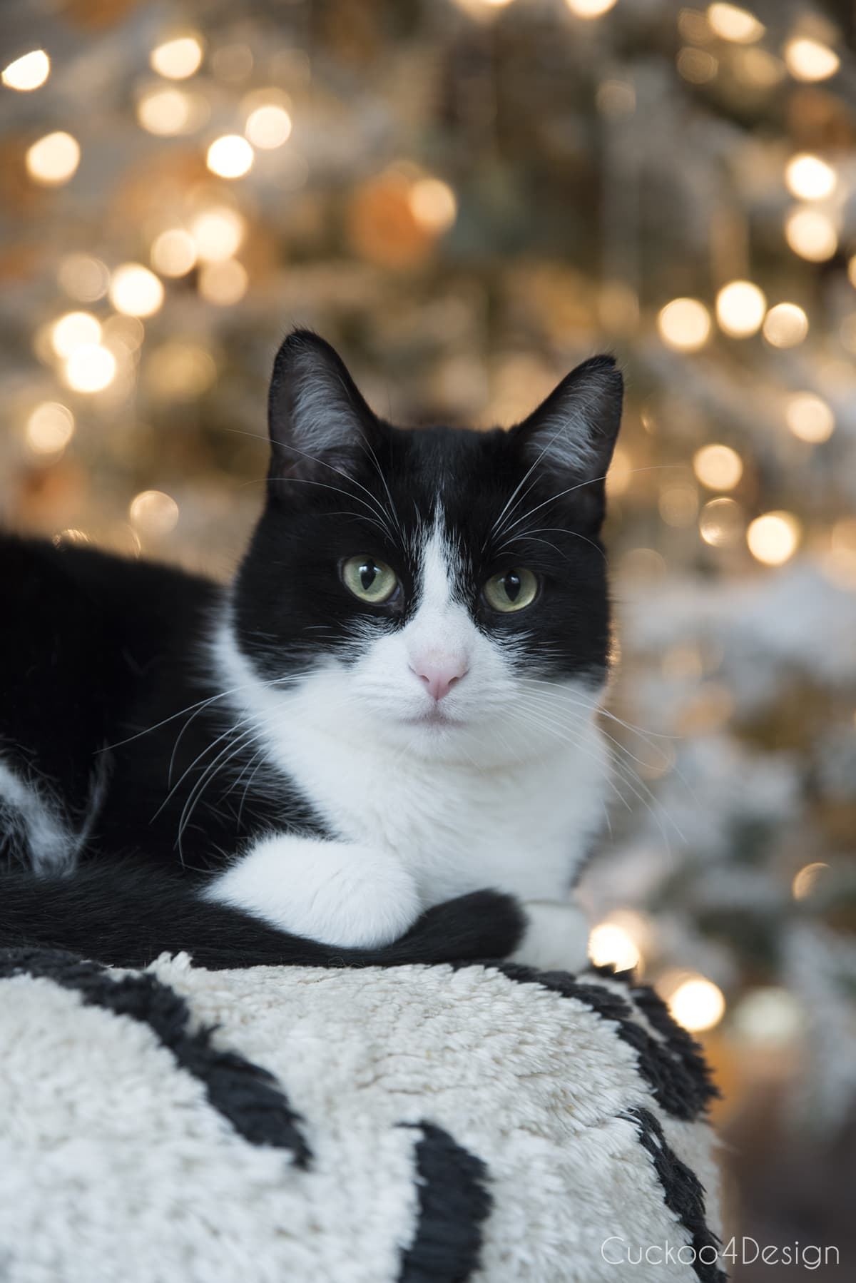 tuxedo cat in front of German Christmas tree