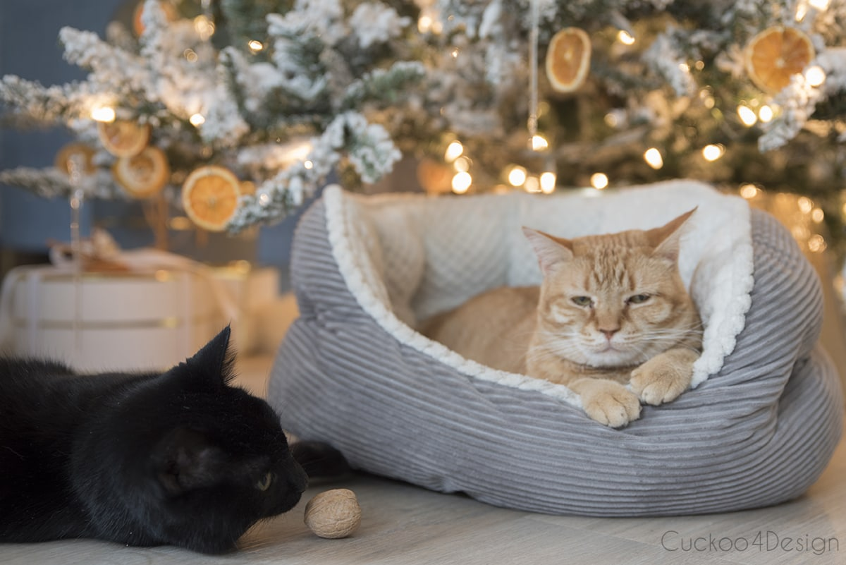 black and orange cat under German Christmas tree
