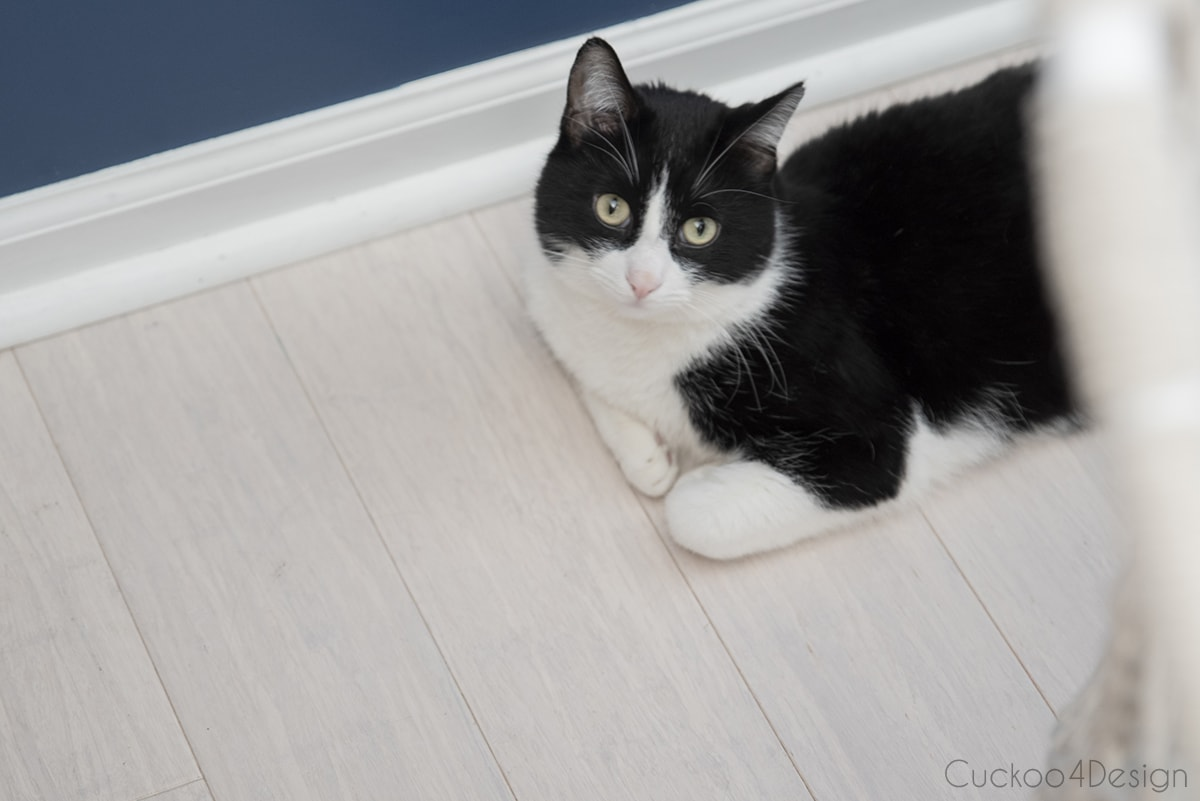 tuxedo cat on the floor