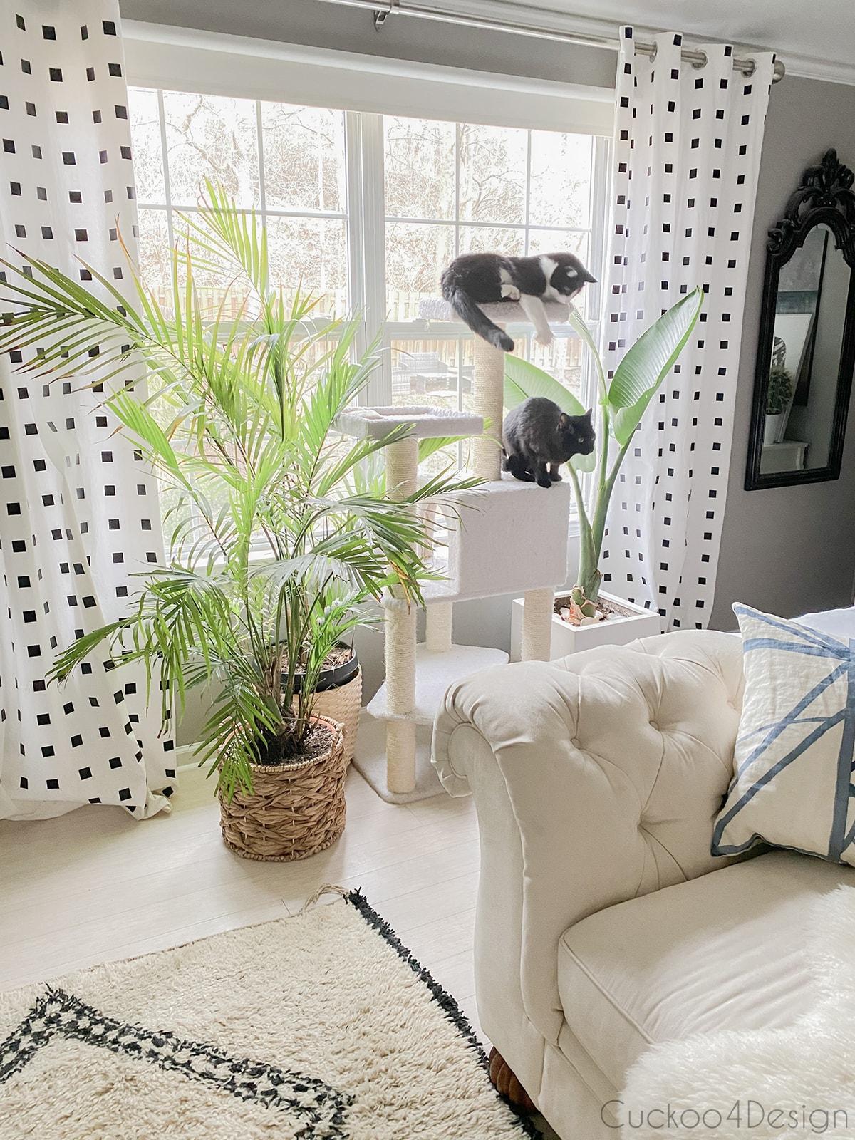 cat tree by bedroom window
