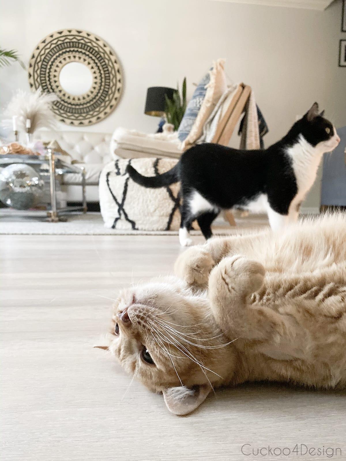 cat rolling around on pet friendly floor