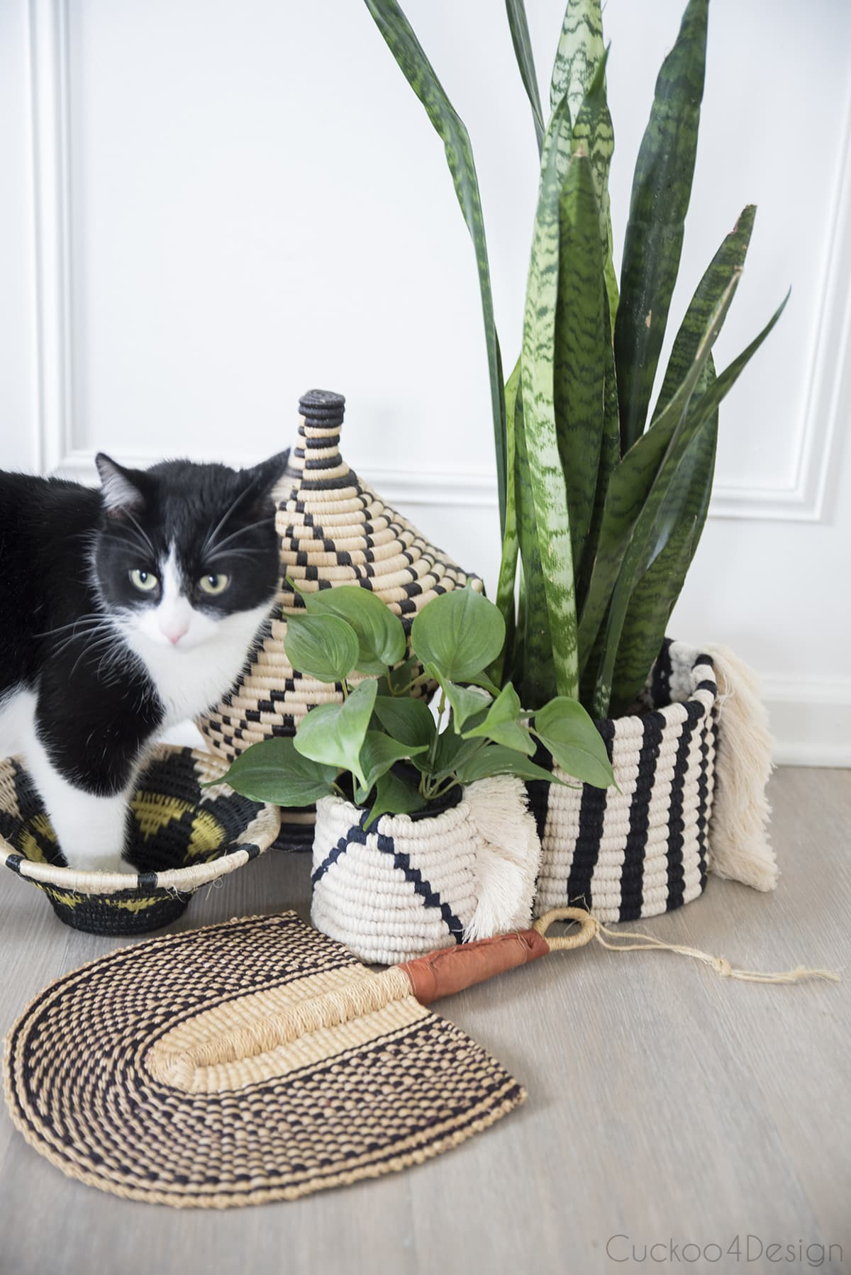 cat trying to sit in macrame basket