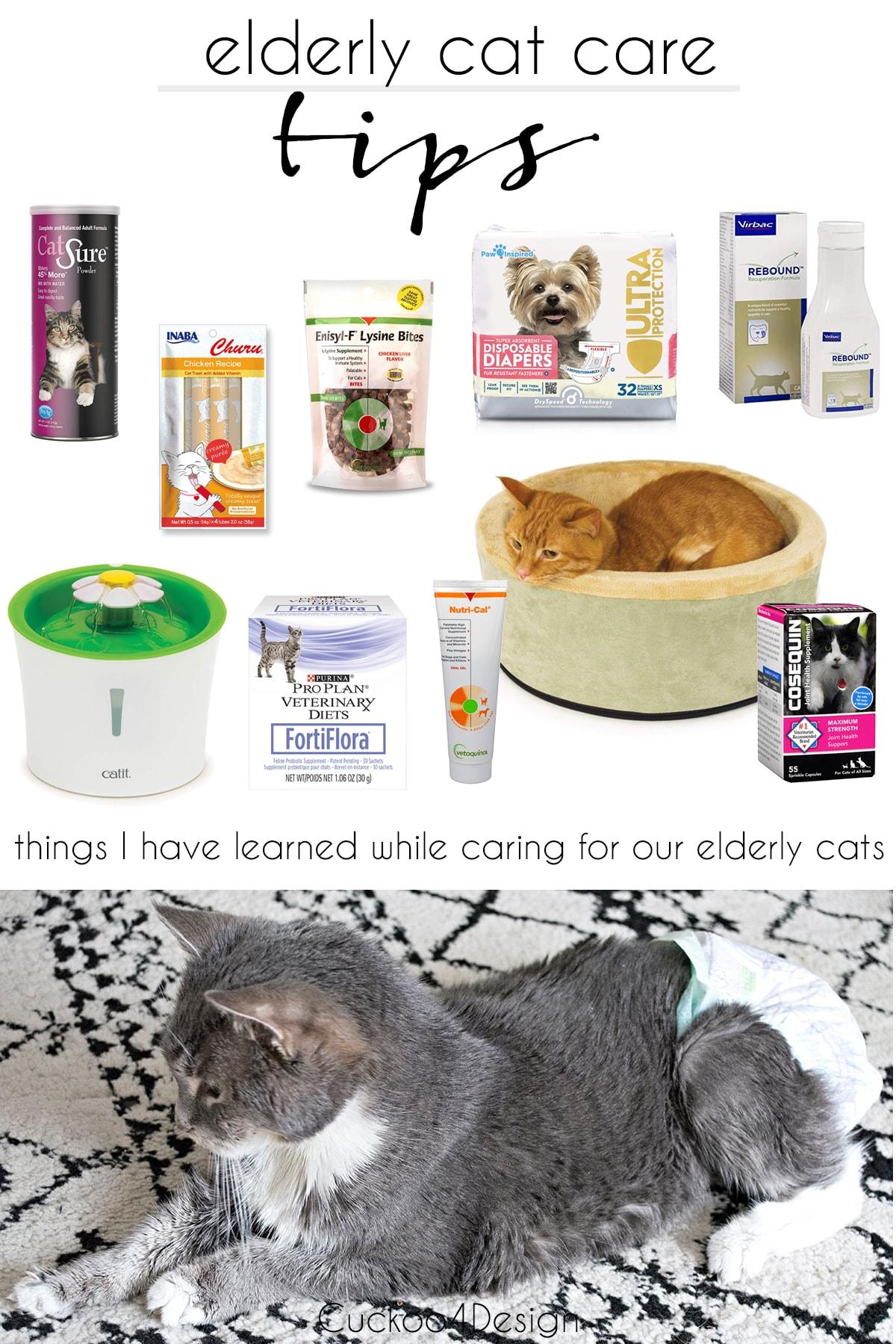 elderly cat care tips