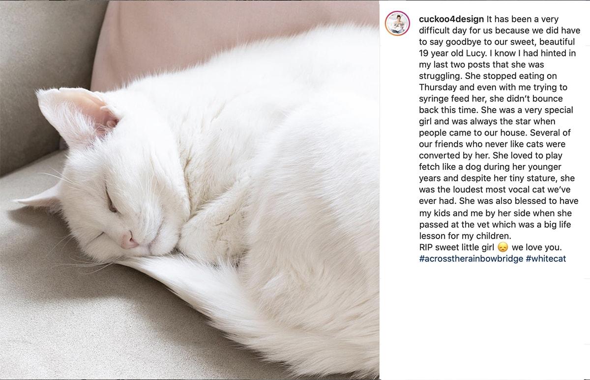 Instagram eulogy of elderly white cat that passed away