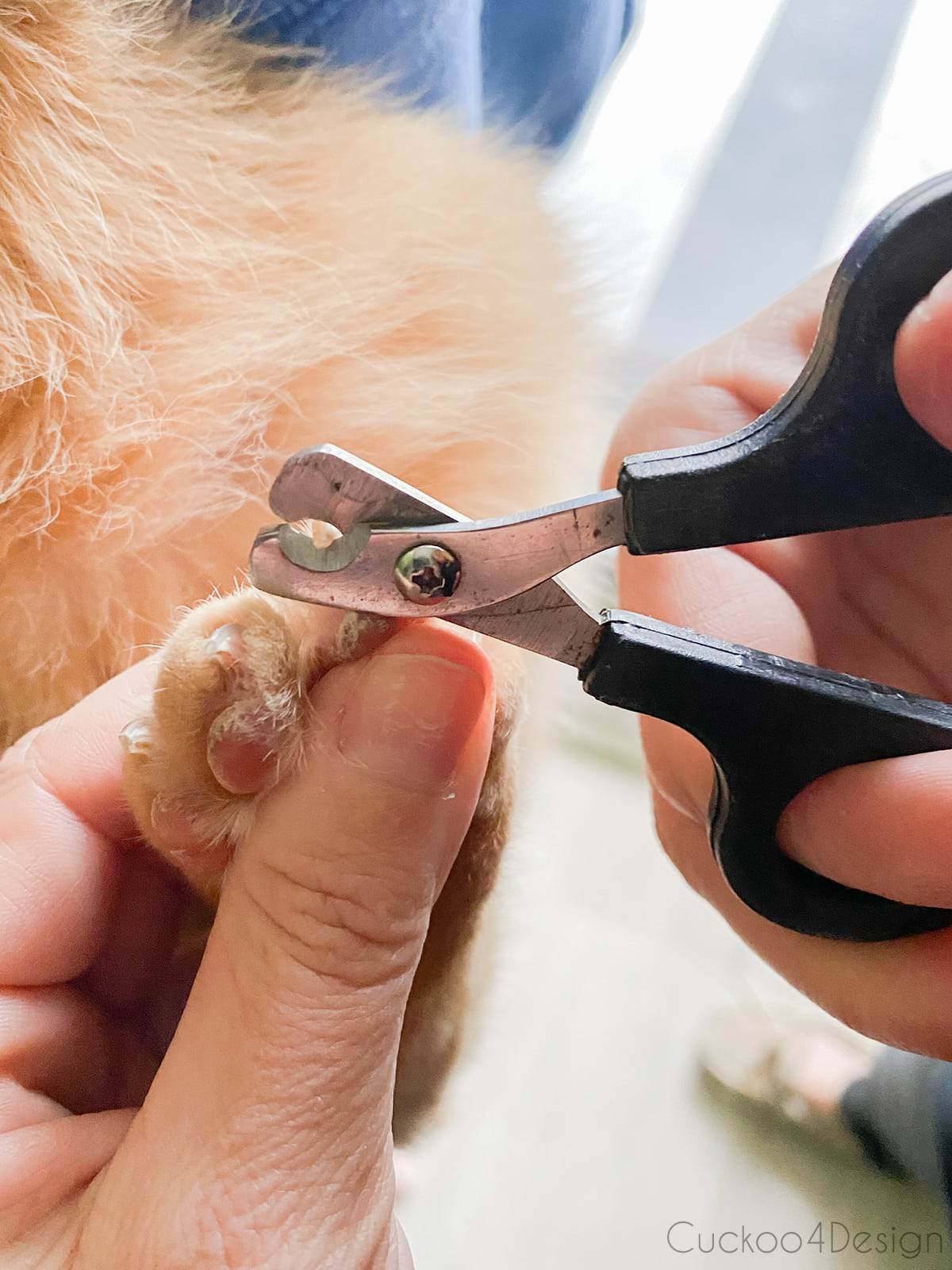 trimming cat claws with pet nail clippers