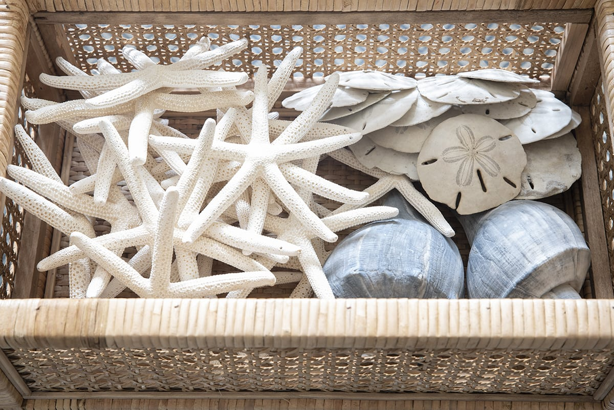conch shells, sand dollars and starfish collection in woven rattan basket