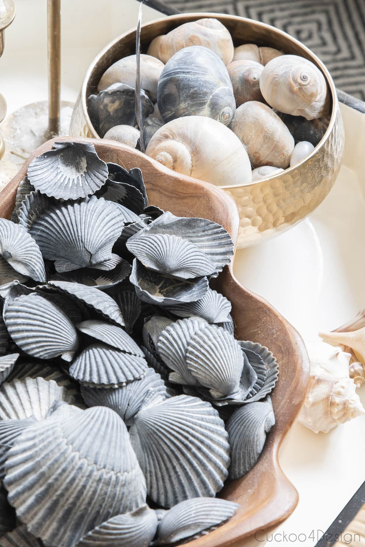 black seashell collection