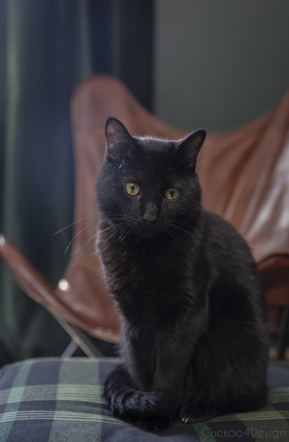 black cat sitting on green plaid floor pouf