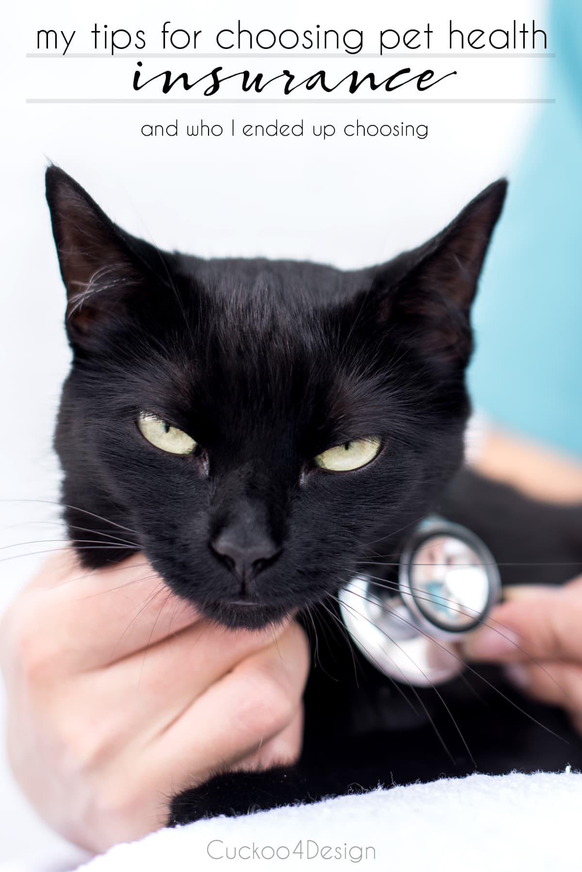 my tips for choosing pet health insurance
