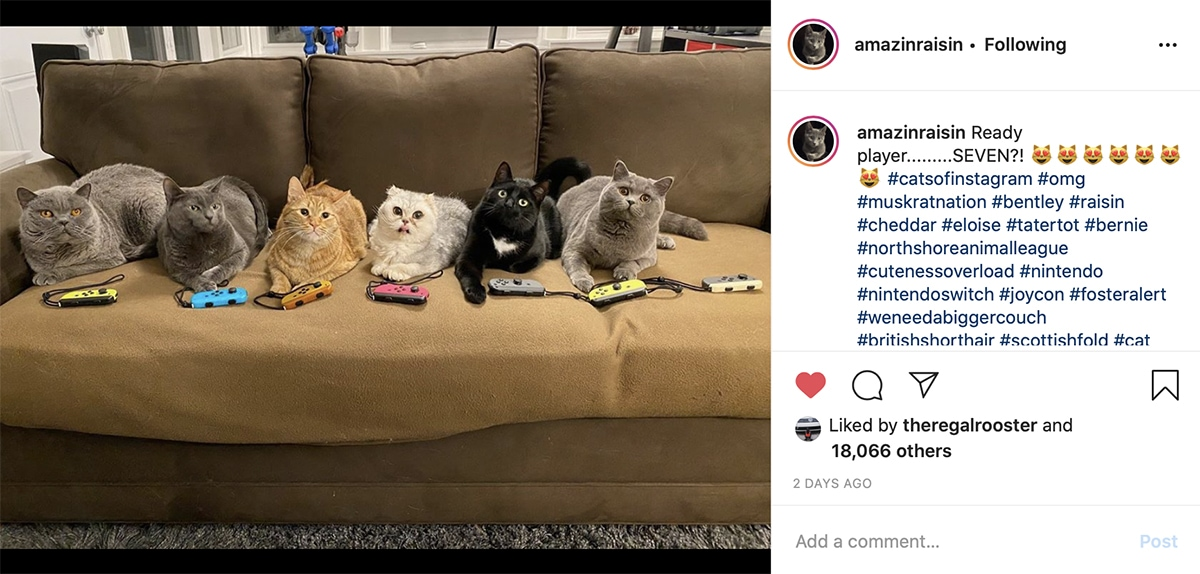 5 cats sitting on the sofa