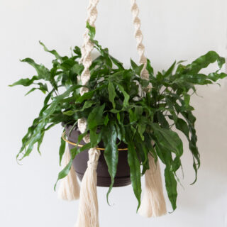 How to make a macrame plant hanger the quick and easy way