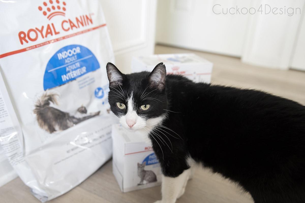 tuxedo cat in front of cat food