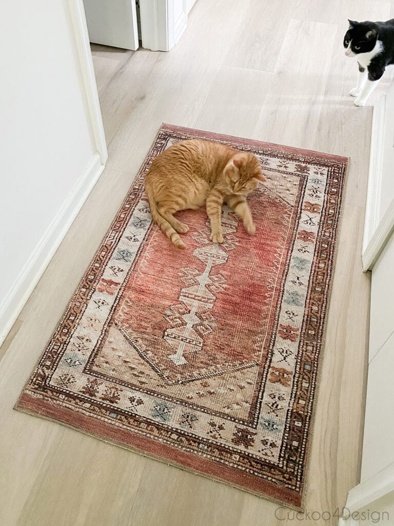 cat laying on small area rug