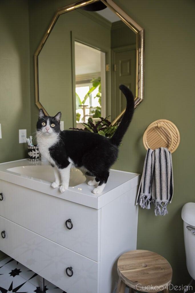 cat standing on bathroom sink