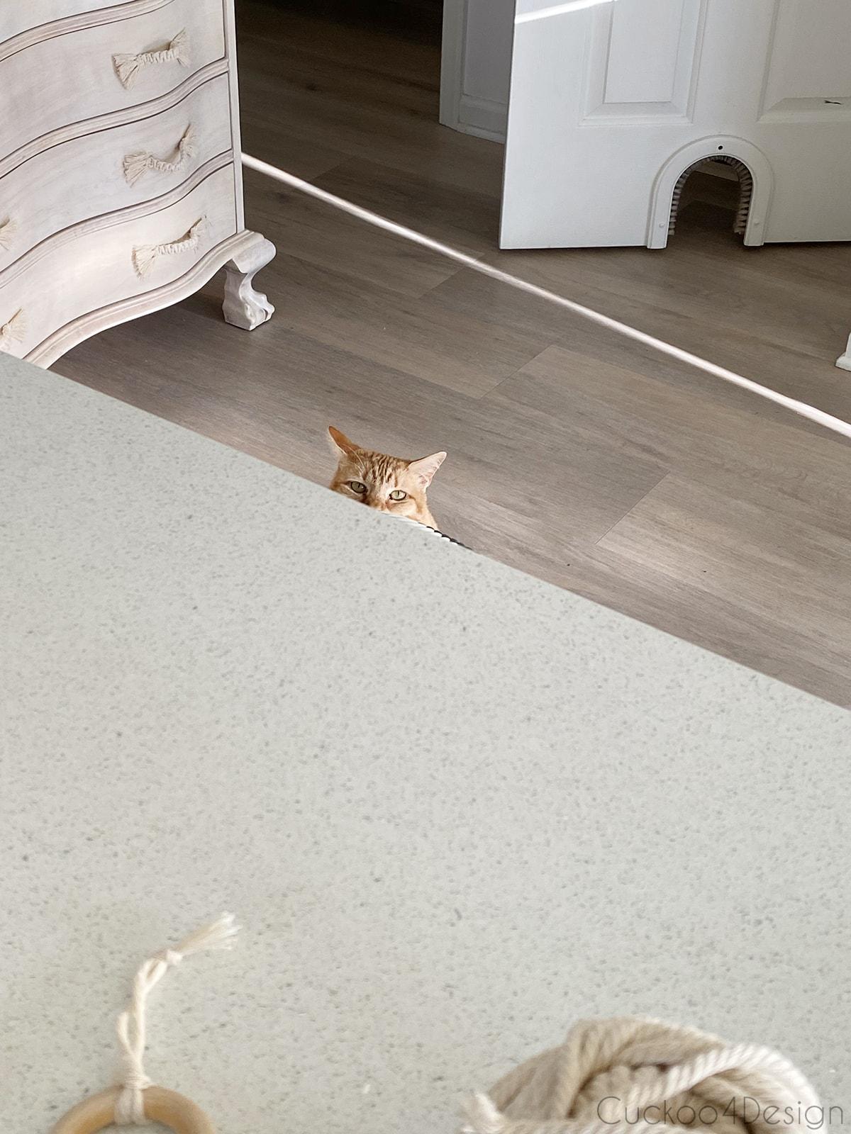 cat watching me do macrame