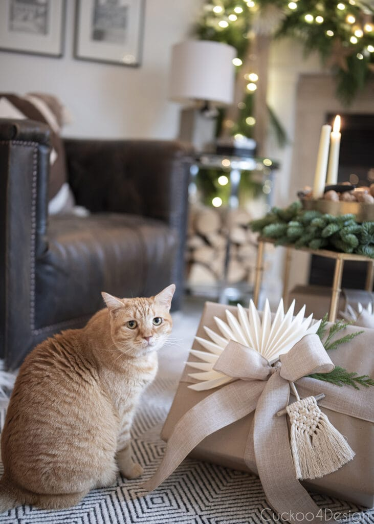orange tabby sitting next to wrapped gift