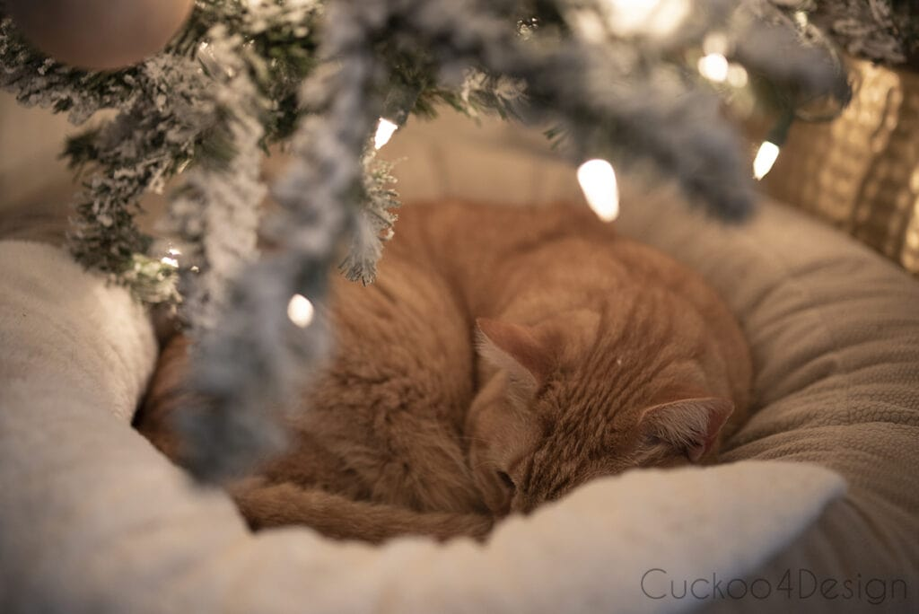 orange tabby sleeping under Christmas tree