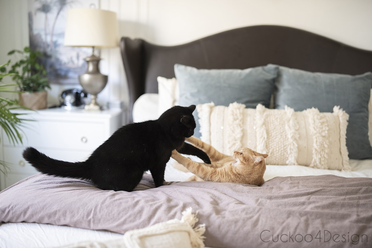 cats wrestling on bed