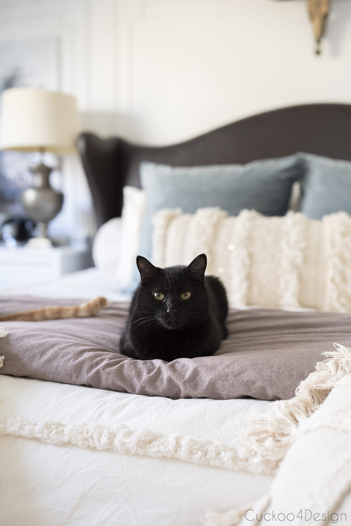 black cat laying on bed