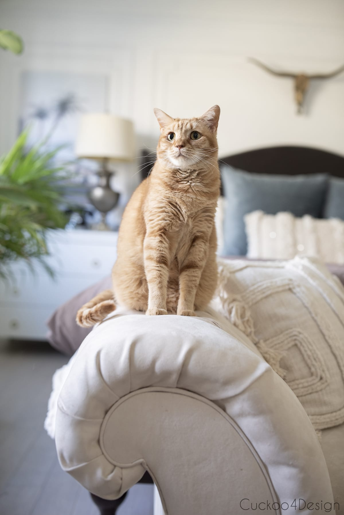 orange tabby sitting on bedroom chaise