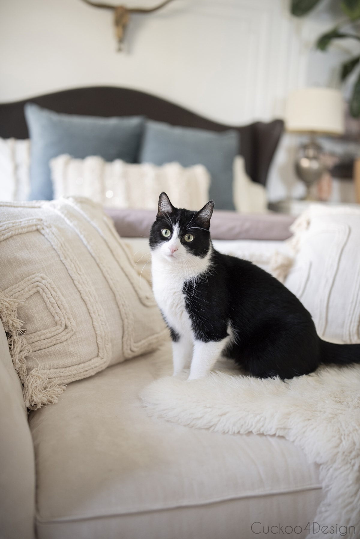 tuxedo cat sitting on bedroom chaise