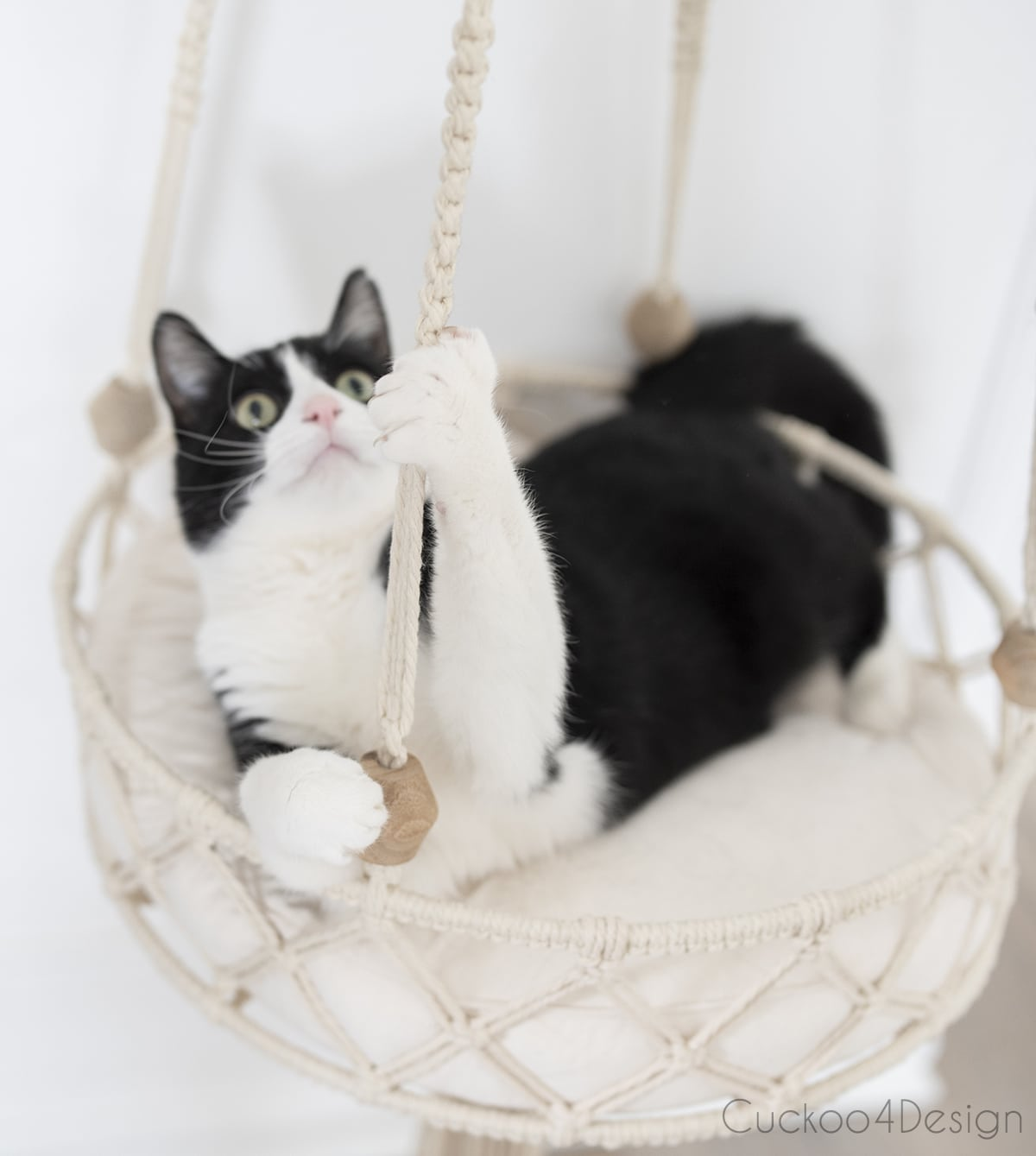 cat holding on the hanging strands on hanging macrame bed