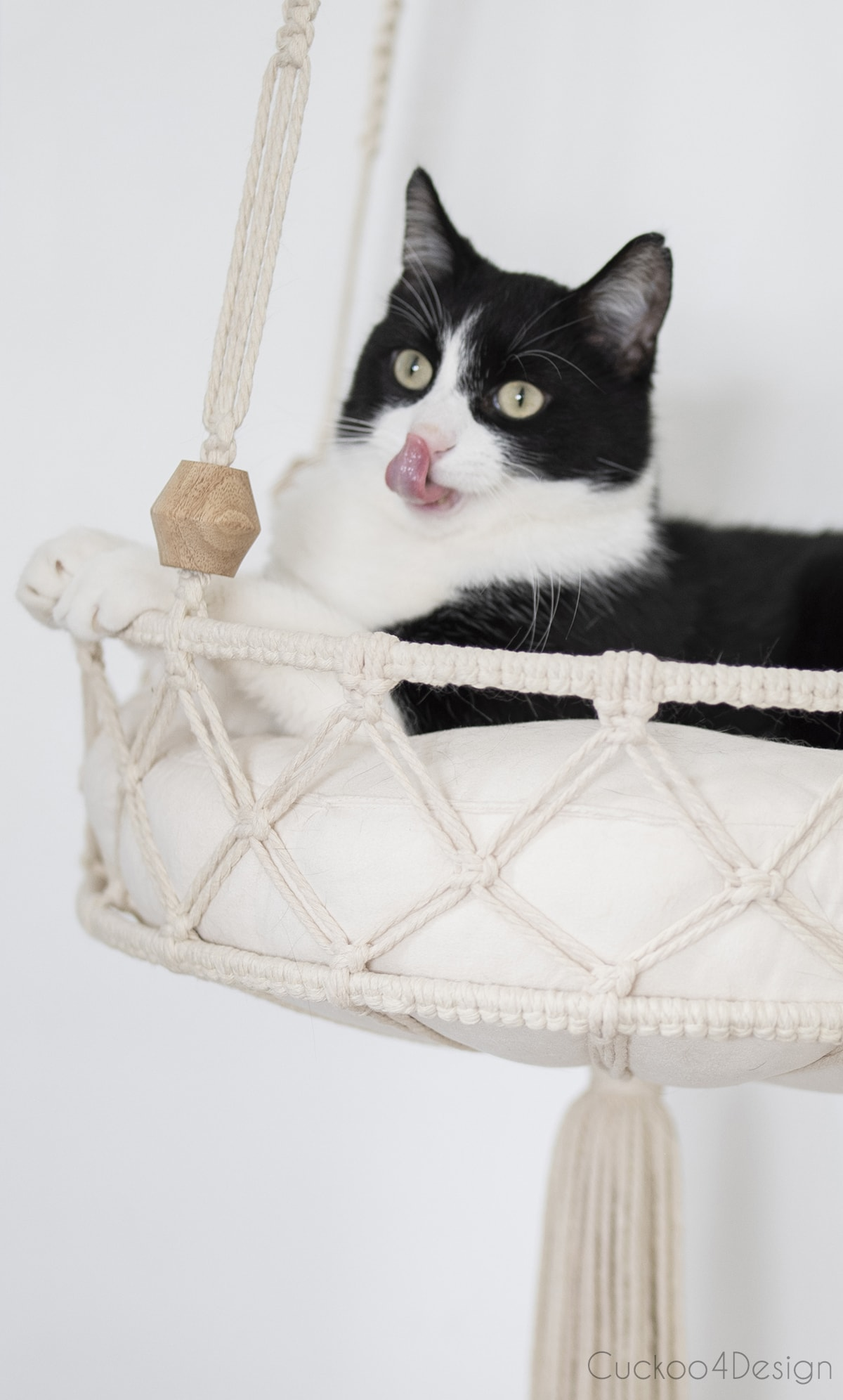 close up of tuxedo cat in hanging DIY cat bed