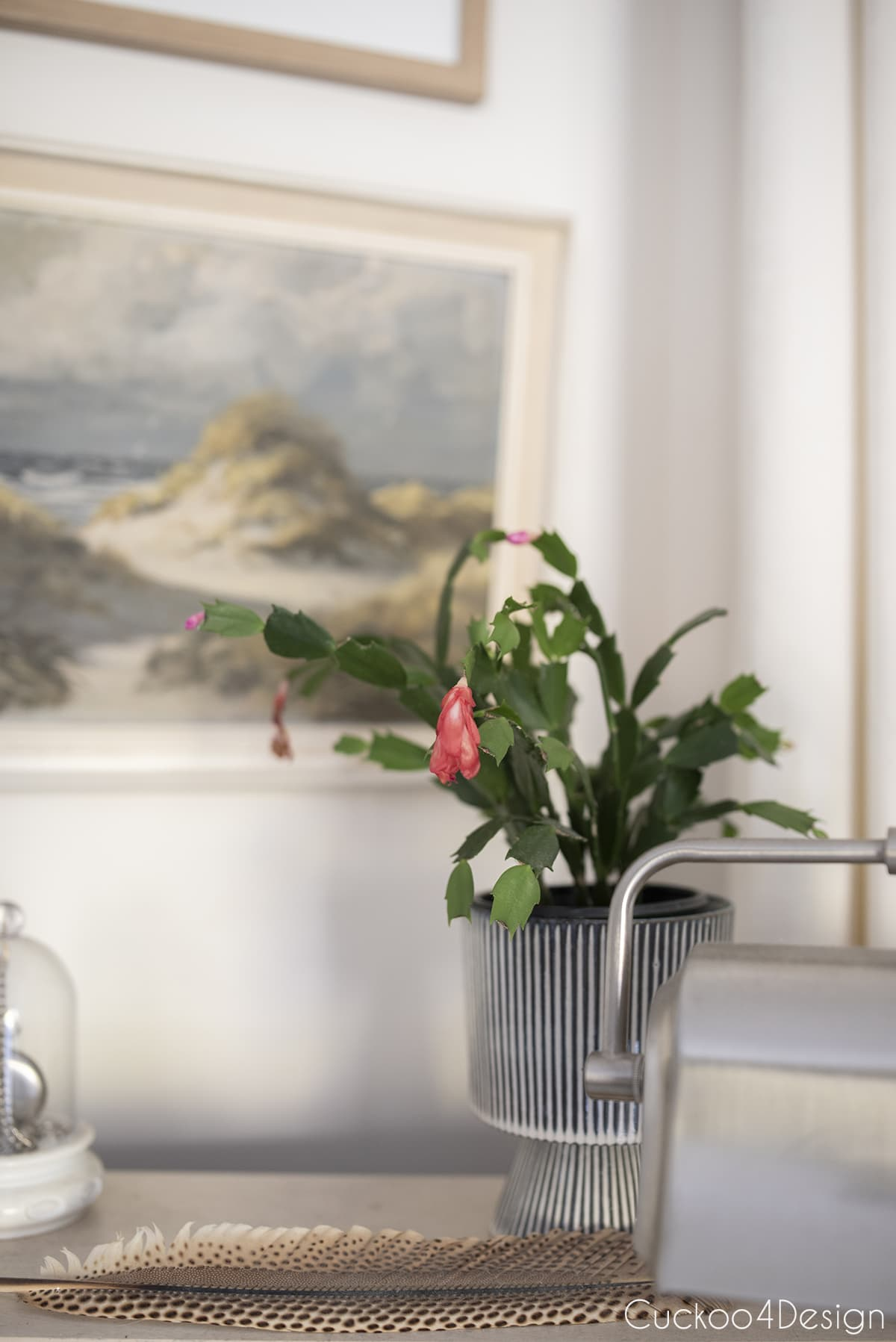 Christmas cactus in blue striped pot on desk