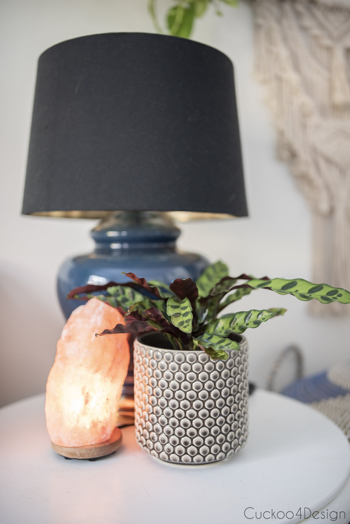 rattle snake plant in beautiful pot