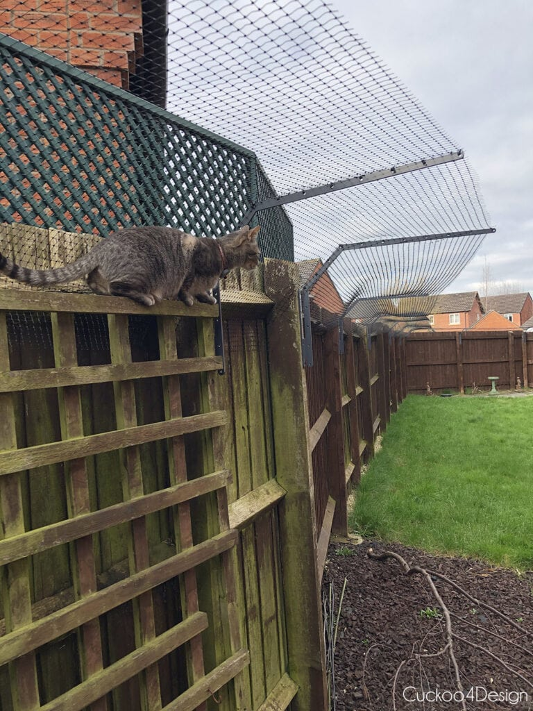 photo of cat fence topper with cat trying to escape