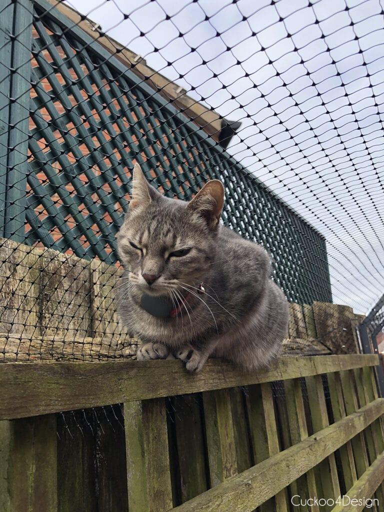cat sitting under cat fence topper
