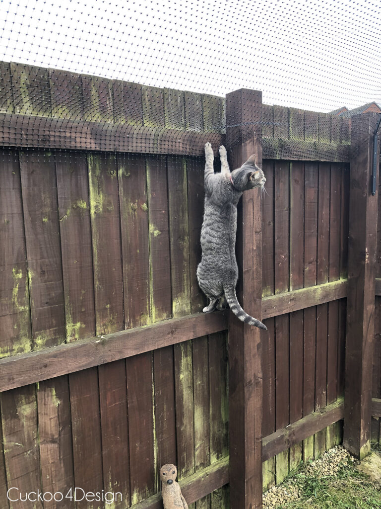 cat jumping up into cat fence topper