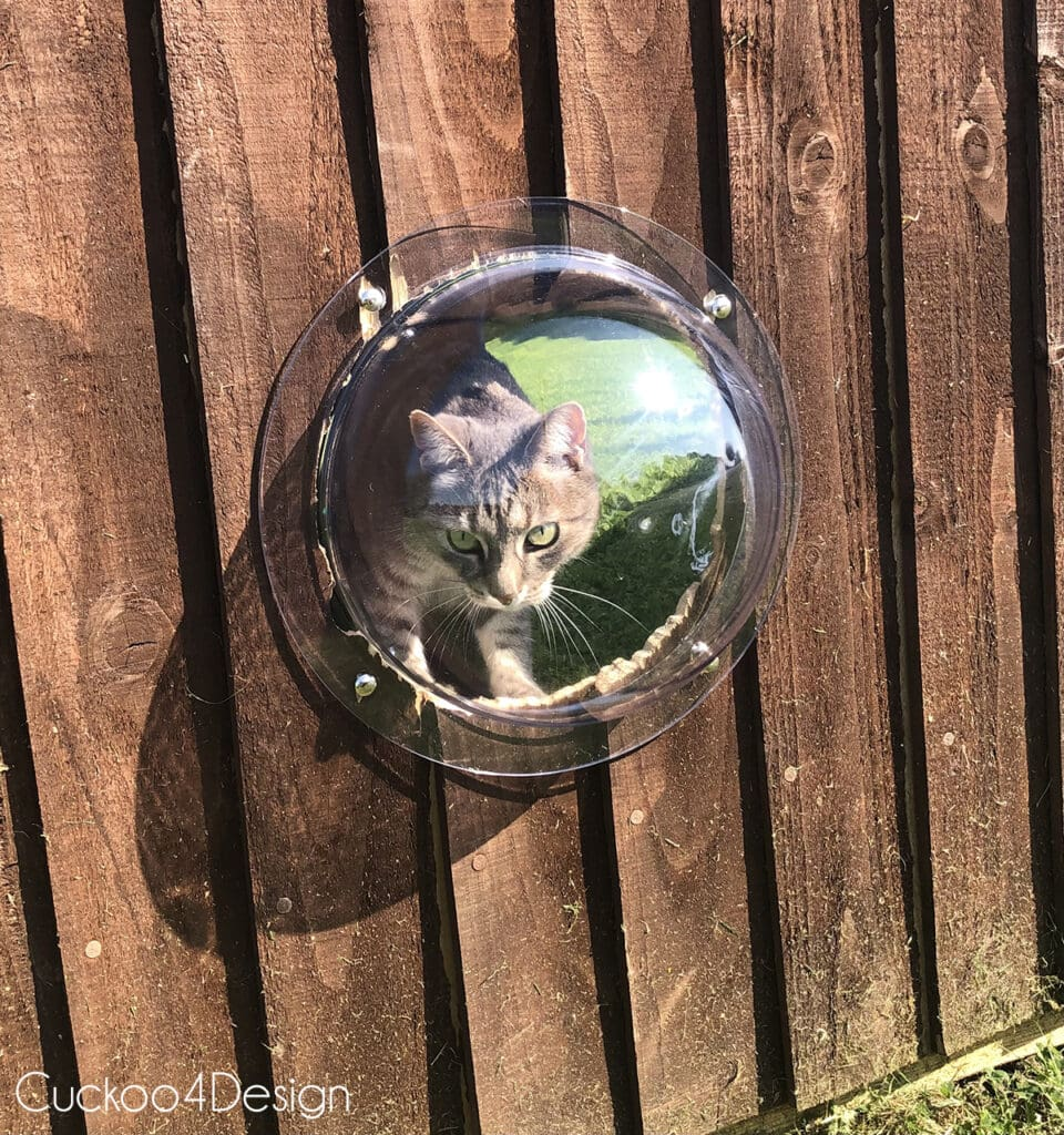 cat looking through dome fence window