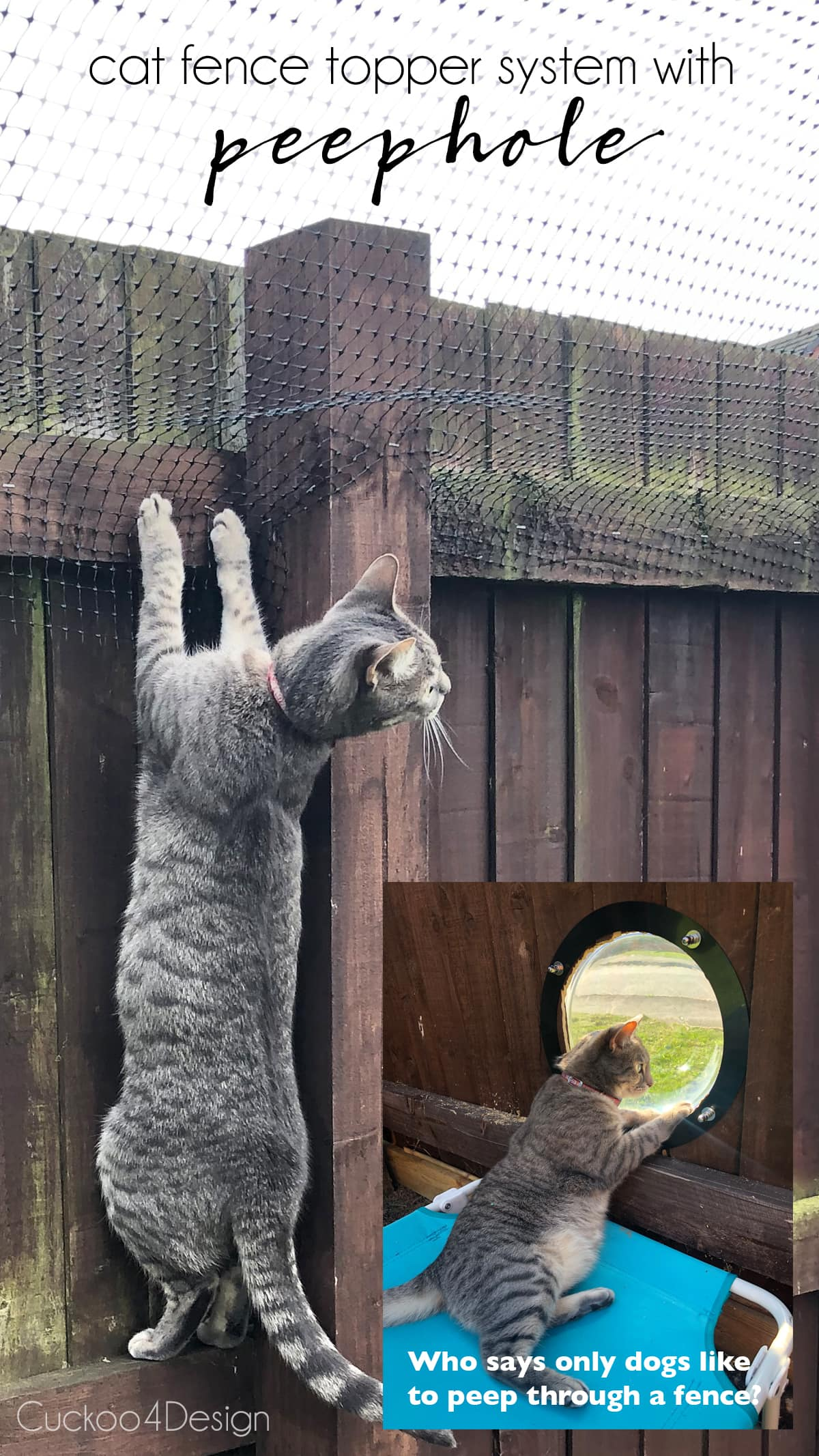 view of cat climbing the fence and peeping through the fence