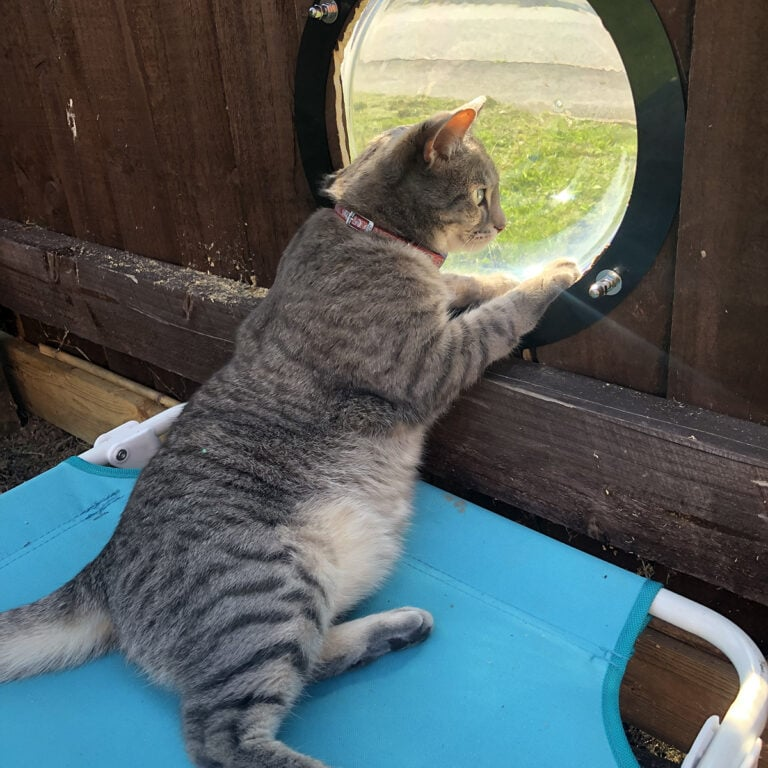 Cat Fence Topper System with Peephole