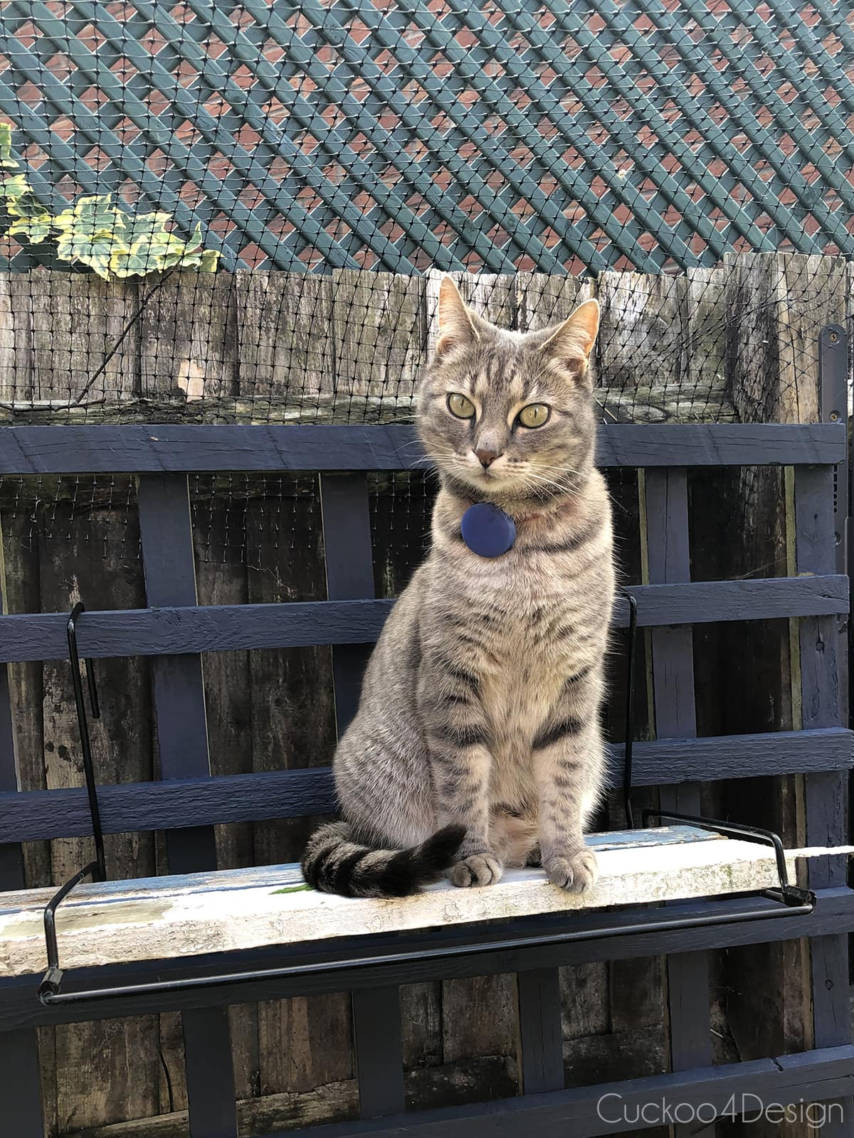 cat sitting on outdoor cat perch