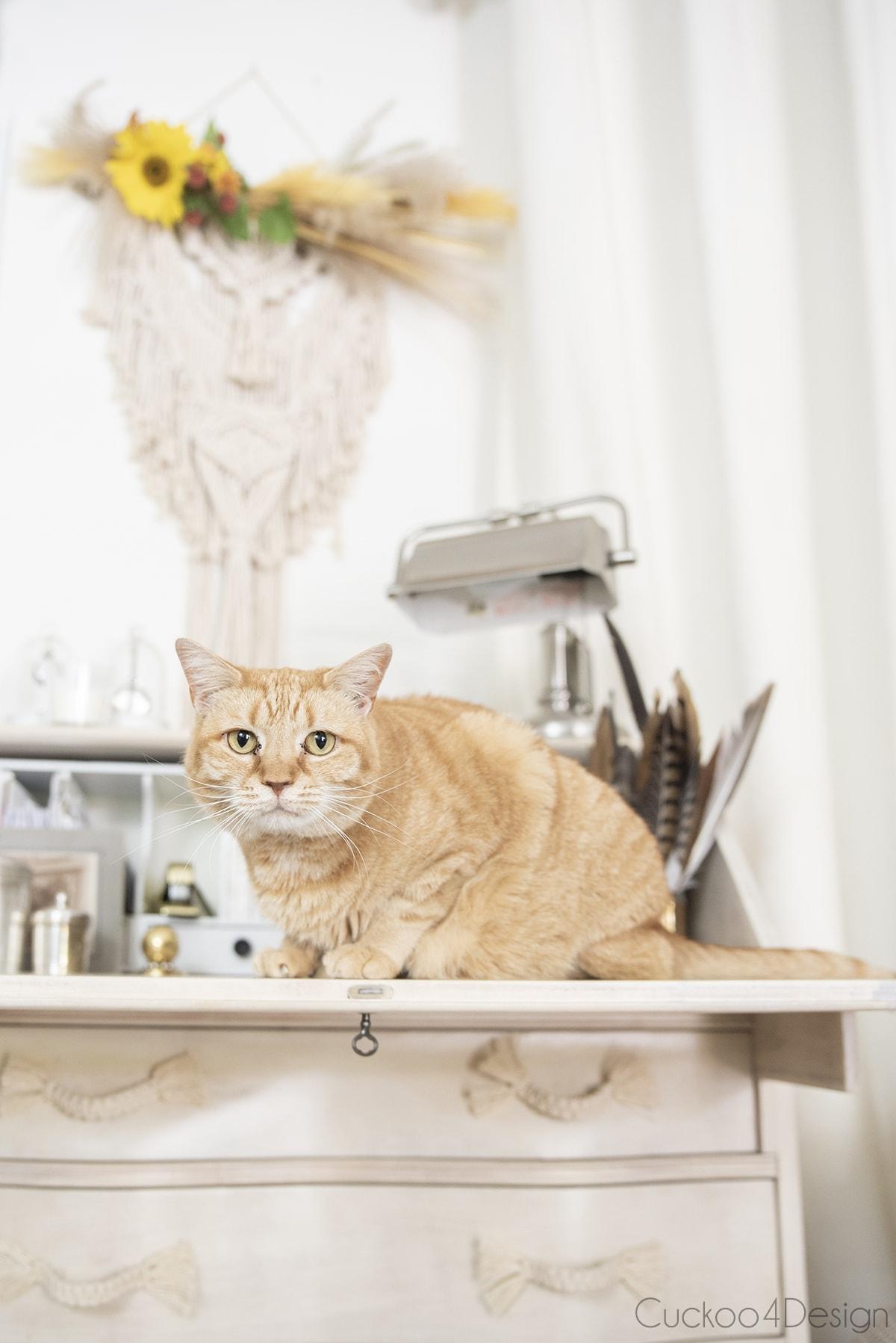 cat sitting on secretary desk below simple boho fall decor
